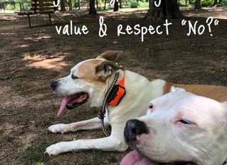 "Teach your dog to value & respect ""No."""