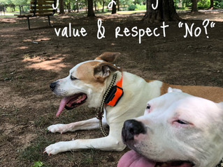 "Teach your dog to value & respect ""No."""