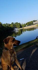 Aggressive Dog Rehabilitation Charlotte