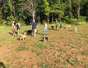 Off leash dog play and group obedience class