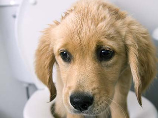 Potty Training Your Dog 101: Why does my dog continue to have accidents in the home?