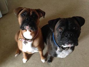 Training Boxers Dog Training