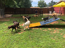 Dog camps and training in Charlotte NC