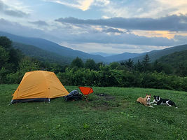 Camping with dogs at Roan Highlands Allegiant K9s