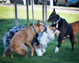 Why dog parks are a BAD idea...