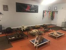 Group place with dog training Charlotte NC