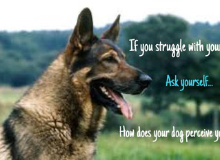 The way your dog PERCEIVES you directly impacts his or her behavior... for better or worse.