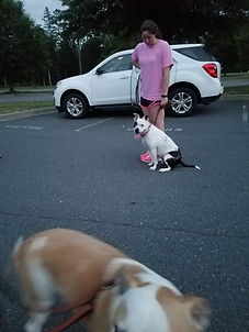 Training with an aggressive Pit bull Charlotte dog training