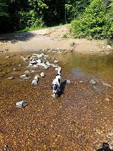 Off Leash Border Collie dog