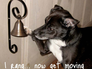 Teaching your dog to ring a bell to go outside... innocent or slippery slope?