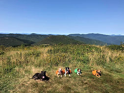 Camping with dogs and hiking with dogs off leash