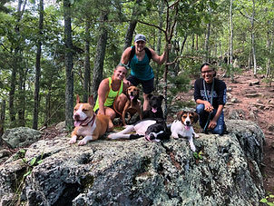 Hiking at Crowders Mountain NC with dogs
