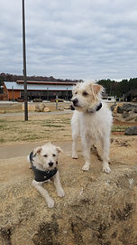 Board and Train Dog Training Charlotte