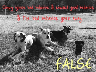 Simply ignoring your dog's bad behaviors & rewarding good behaviors will NOT make the bad be