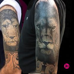Tattoo cover Lion réaliste noir et gris