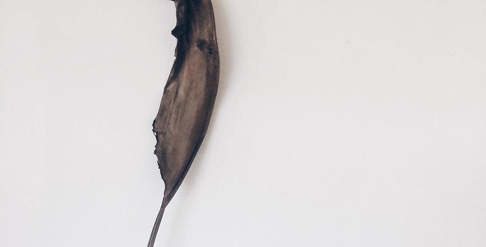 Strelitzia blad, modderbruin