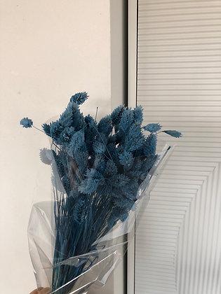 Phalaris Parisien bleu