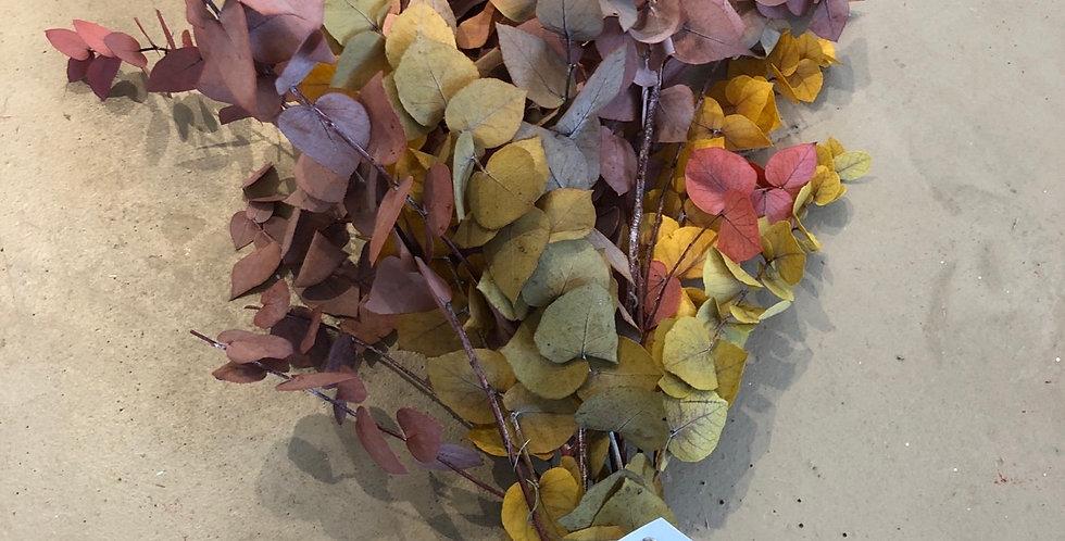 Eucalyptus •4