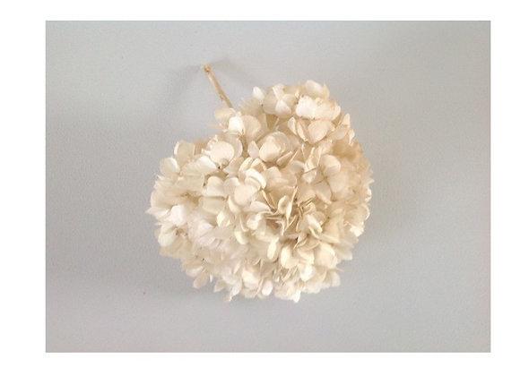 Hortensia pastel/ivory