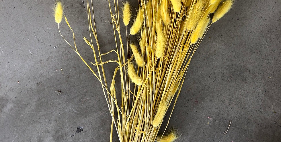 Lagurus geel