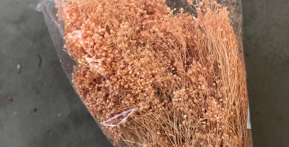 Broom (zalm)