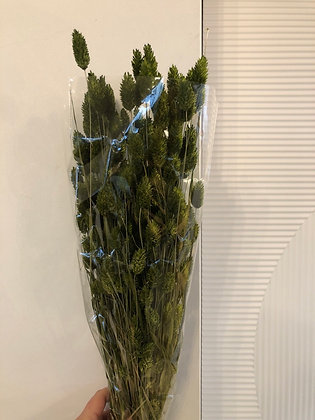 Phalaris groen