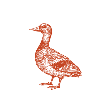 PATO-02_edited_edited.png