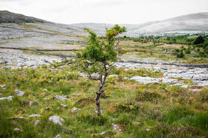 Landscape as Witness - Field Trip: Day 6