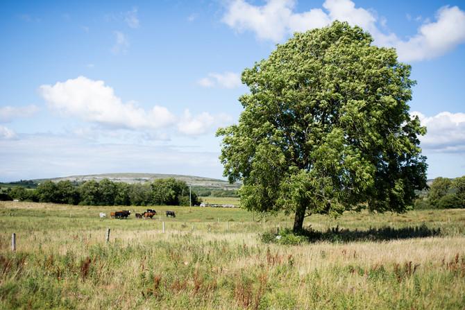 Landscape as Witness - Field Trip: Day 5