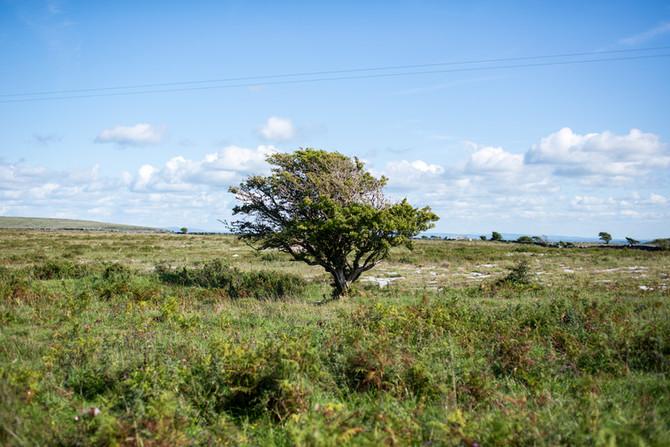 Landscape as Witness - Field Trip: Day 22