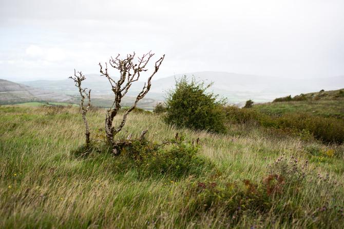 Landscape as Witness - Field Trip: Day 28