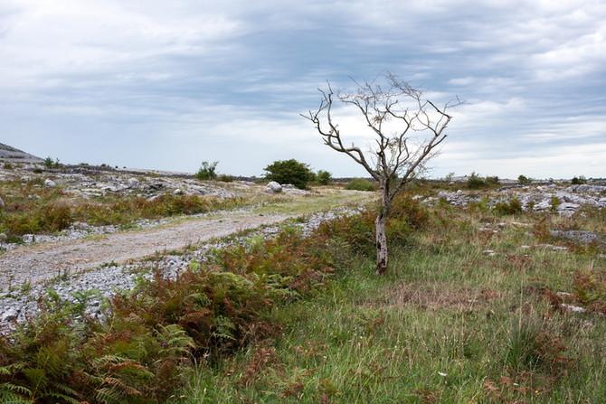 Landscape as Witness - Field Trip: Day 27