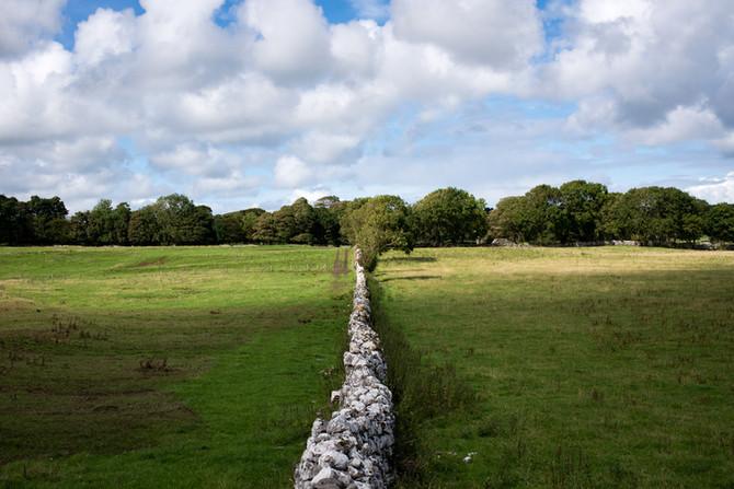 Landscape as Witness - Field Trip: Day 21