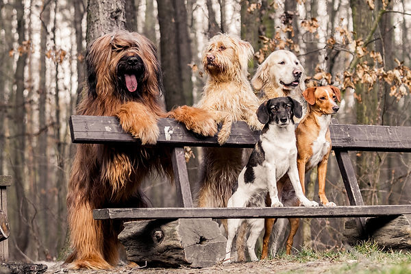 Group dogs on seat in the park.jpg