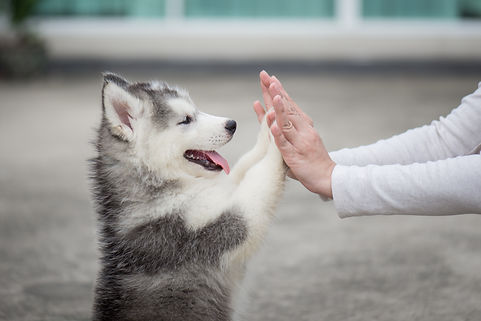 Give me five -Puppy pressing his paw aga