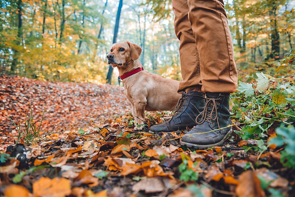 Man hiking in autumn colorful forest wit