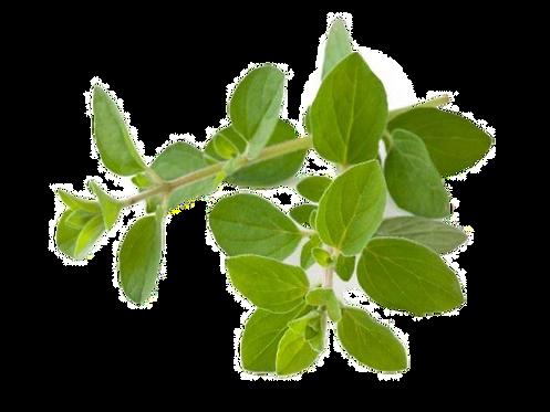 Oregano Infused Olive Oil