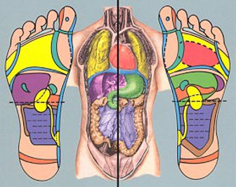 reflexology foot map with corresponding body for certified reflexologist in seattle best foot massage