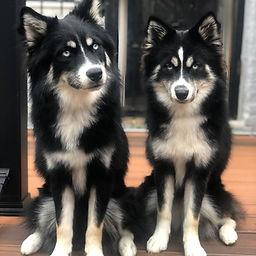 Pomsky Twins.jpg