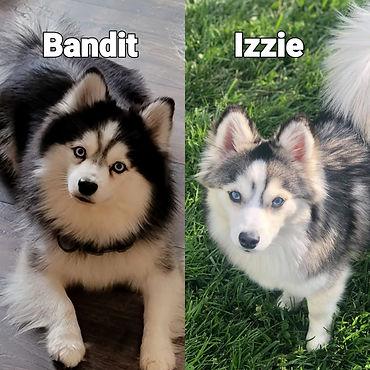 Izzie - Bandit.jpg