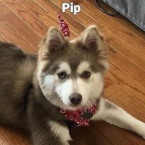 Pip2.jpg