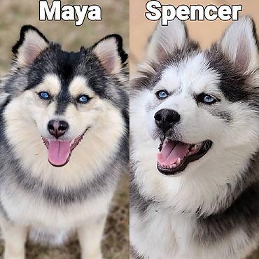 Maaye - Spencer.jpg