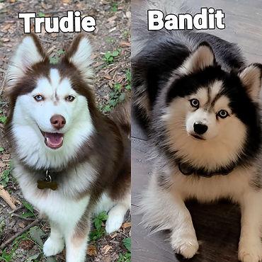 Trudie - Bandit.jpg