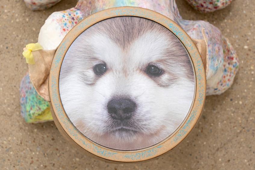 Good boy_3.jpg