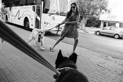 dogs_008.jpg