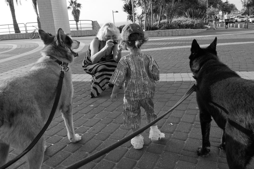 dogs_004.jpg