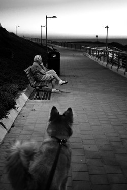 dogs_016.jpg