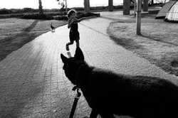 dogs_013.jpg