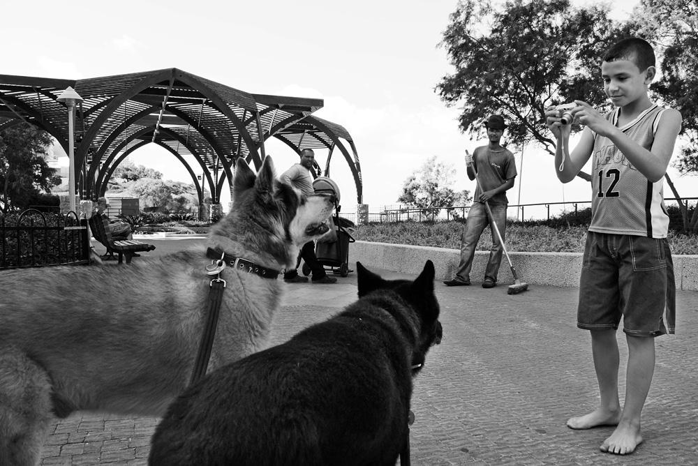 dogs_019.jpg