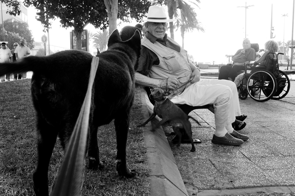 dogs_007.jpg